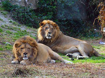 guia-ronda-estepona-leones-selwo